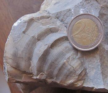 Où trouver des fossiles dans la Drôme ?
