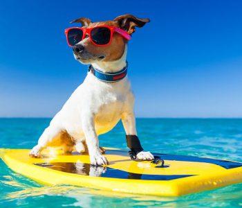 Les conditions pour voyager avec son chien
